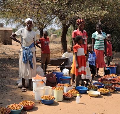 Homebrew kit - Zimbabwe style